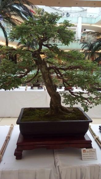 1-Bosái exhibido en Ágora Mall