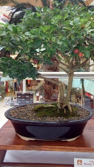 3-Bosái exhibido en Ágora Mall