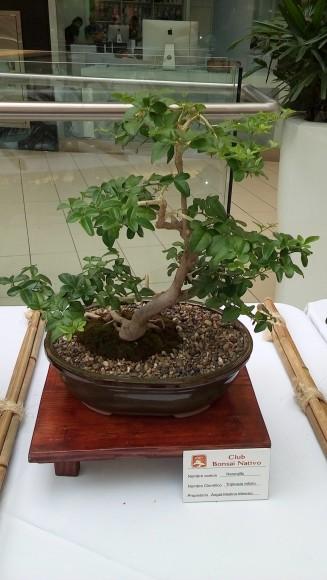 4-Bosái exhibido en Ágora Mall