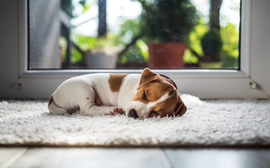 perros-dormir-2-XxXx80