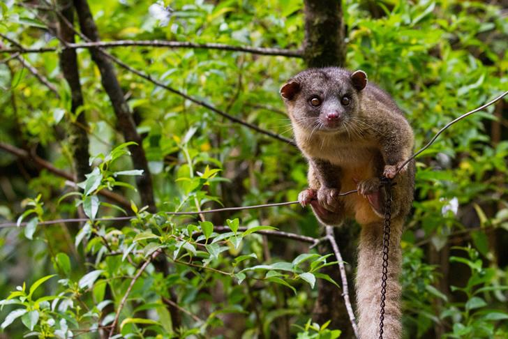 bosque-nuboso-reserva-biodiversidad-costa-rica